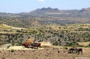 Ethiopia agriculture