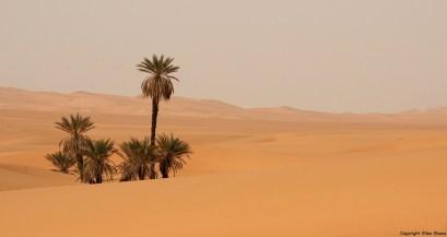 Sahara dessert safari: Erg Ubari