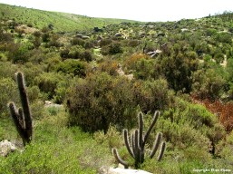 Chile, Valle del Encanto