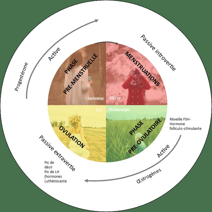 phases-cycle-menstruel-celine-germain