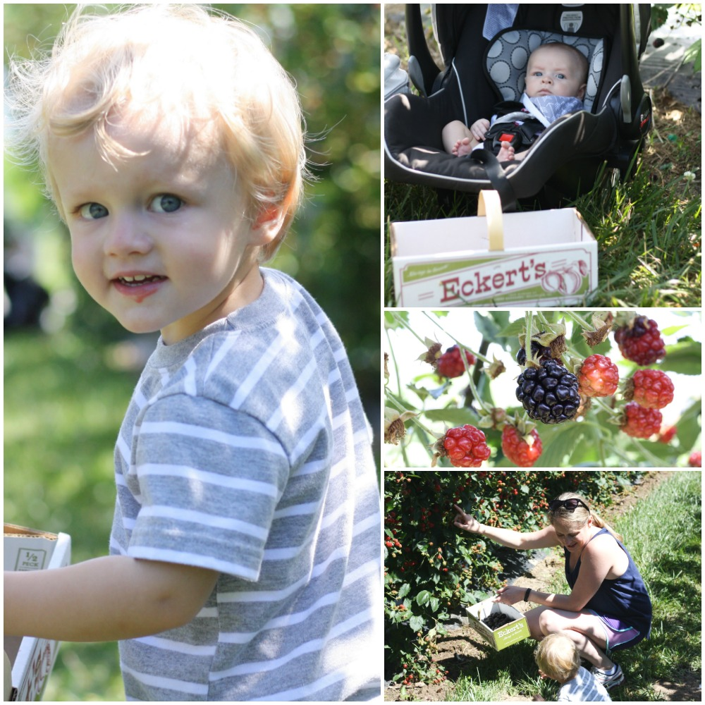 Blackberry Adventures at Eckert's | Ellie And Addie