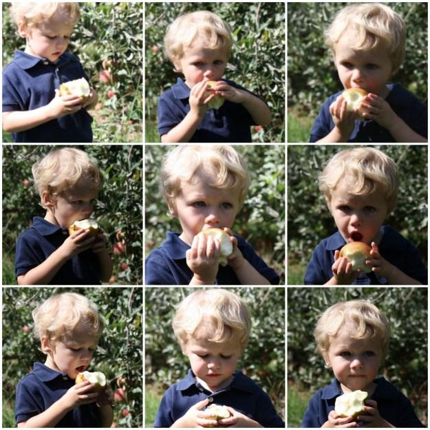 Apple Picking at Eckert's   Ellie And Addie