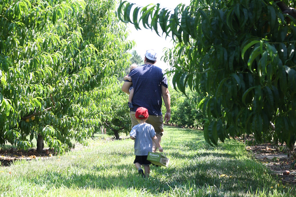 Peach Picking at Eckert's | Ellie And Addie