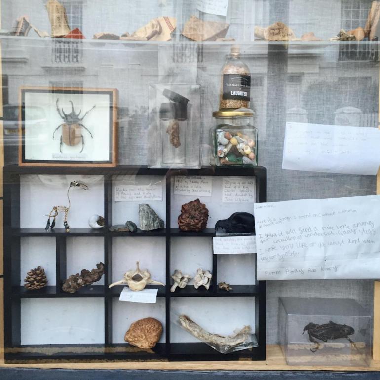 anna's museum shop window brighton