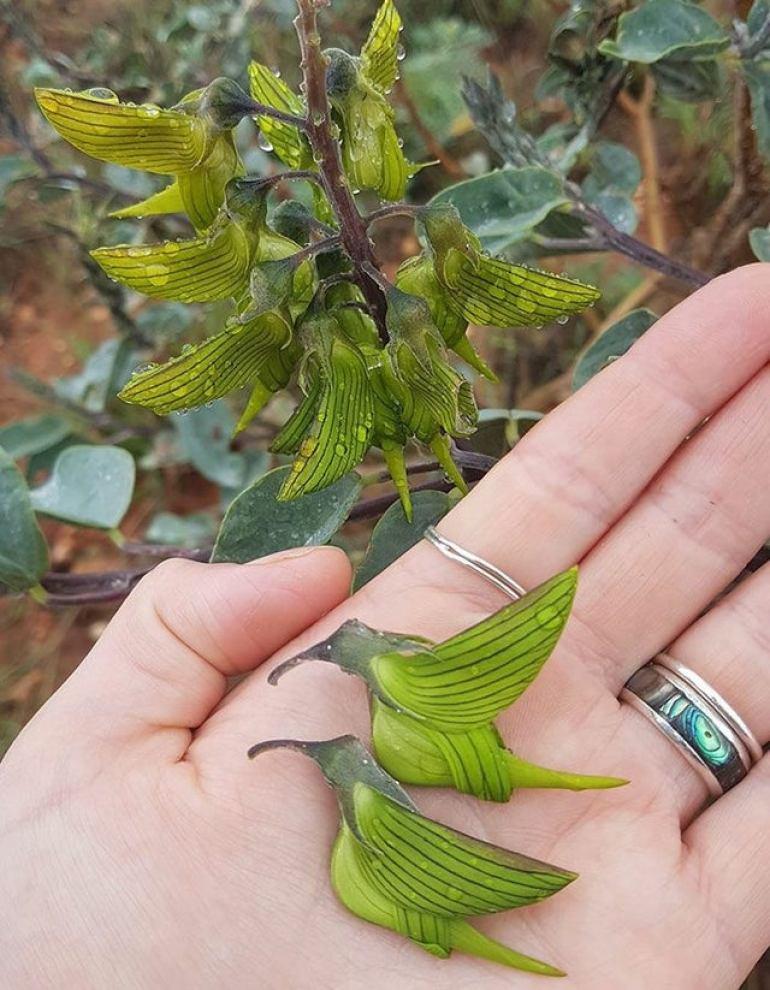 plant like bird