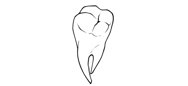 Tooth illustration