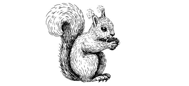 """Squirrel illustration - """"What Does He Have?"""" Microfiction"""