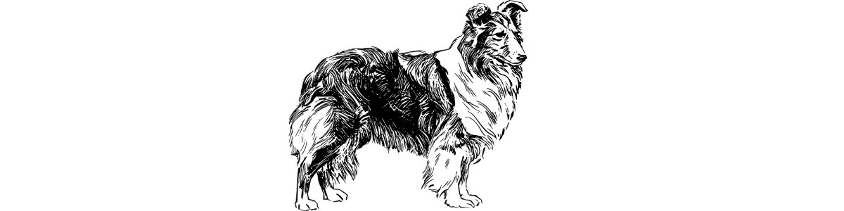 "Collie dog illustration - ""Making Friends"" microfiction"