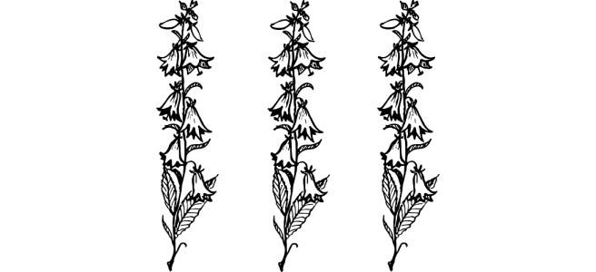 """Bluebells black and white illustration - """"Bluebells"""" short story"""