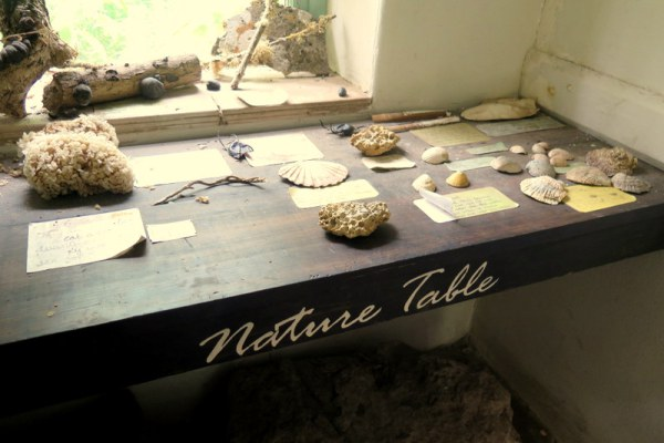 Photo of nature table