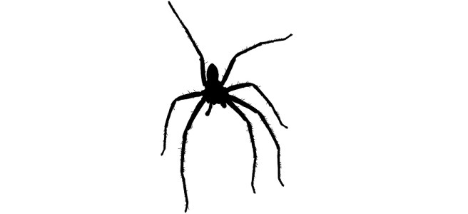 """Hairy spider silhouette - """"Trick"""" microfiction"""