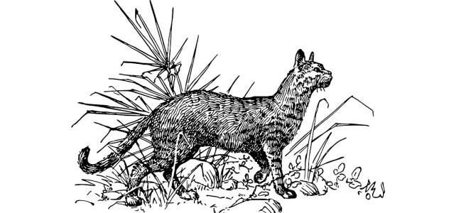 """Cat illustration - """"What the Hell Are You?"""" flash fiction"""