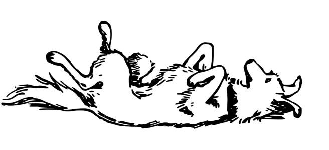 Dog rolling on its back illustration