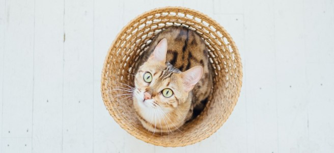 Tabby cat in a wicker basket