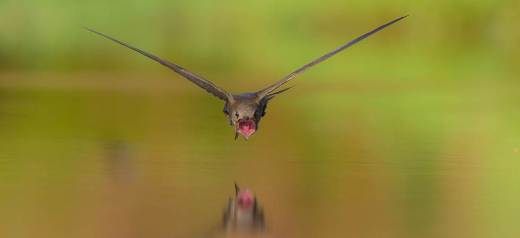 Greek photographer won the World Bird Photo Contest