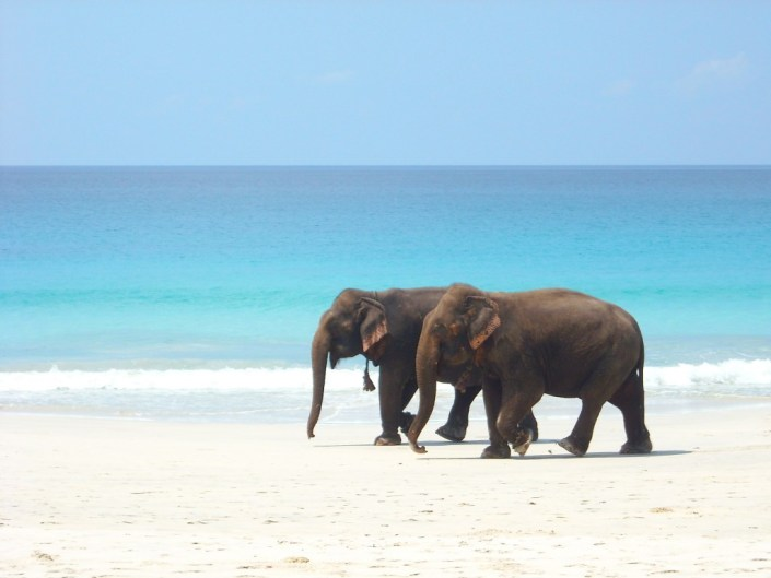 elephants beach walk