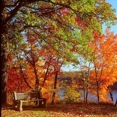 Autumn Bench, St. Paul, Minnesota