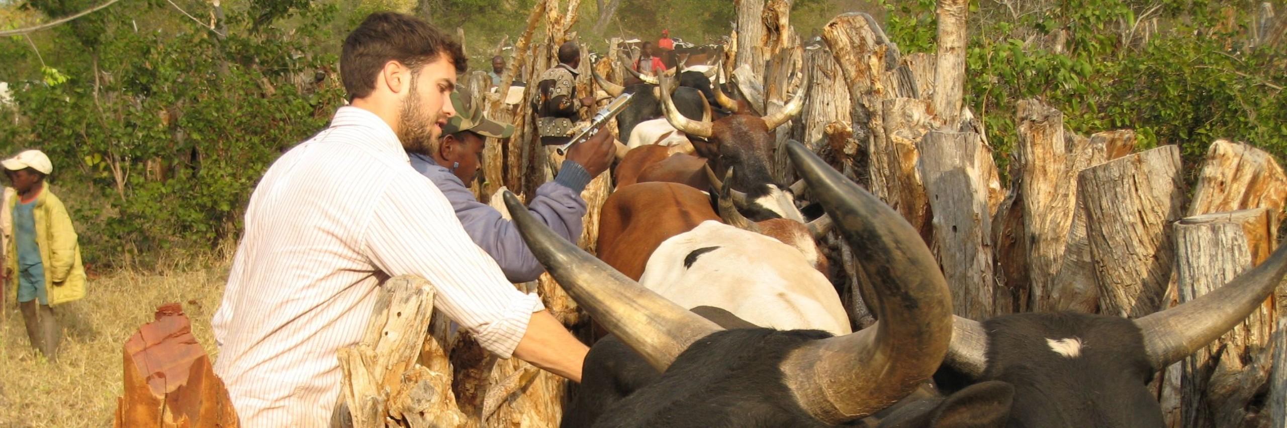 Elliott-Garber-vaccinating-cattle-Mozambique