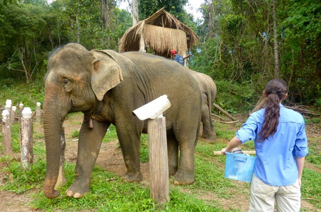 elephant-conservation-center-Laos