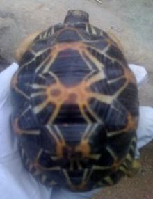 tortoise-behler-chelonian-center