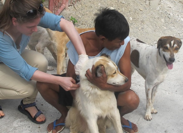 Anne-Christine-Føllesdal-dog-rabies-vaccination-Philippines