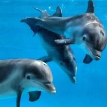 dolphin-calves-marine-mammal-veterinarian
