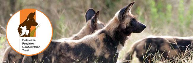 Botswana-Predator-Conservation-Trust
