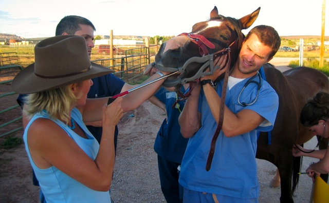 equine-teeth-floating-RAVS-New Mexico