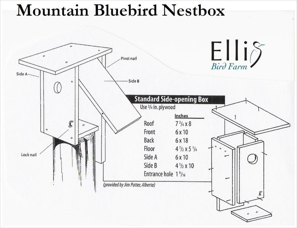 Mountain Bluebird House Plans