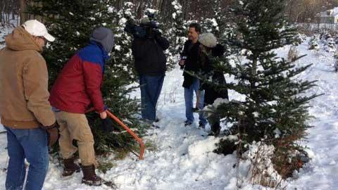 Cut your own christmas tree near Saratoga, NY