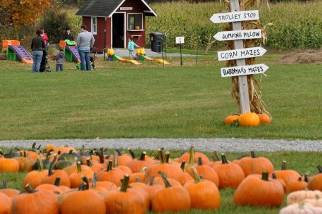 Ellms Farm Pumpkin Patch near Saratoga