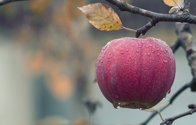 Story Starter! This Would Be The Perfect Apple For…