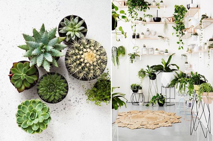 succulent cactus interior design styling www.ellymacdonalddesign.com6