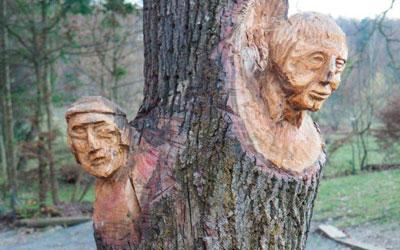 Charakterbaum auf der Steinleitn-Alm
