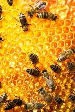 imagen colmena de abejas