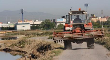 La siega del arroz empieza en Alfafar con vigilancia para evitar robos