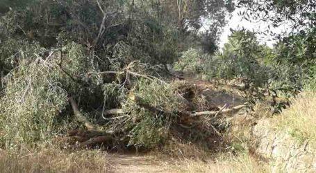 Compromís per Paterna alerta del peligro de incencio en La Cañada si no se retira la poda