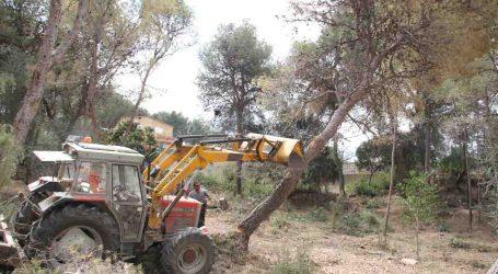El PP de Torrent acusa al gobierno de gastar 7.200€ en privatizar la tala de pinos afectados por tomicus