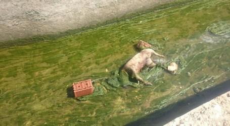 Abren diligencias en Paterna por un caso de maltrato animal