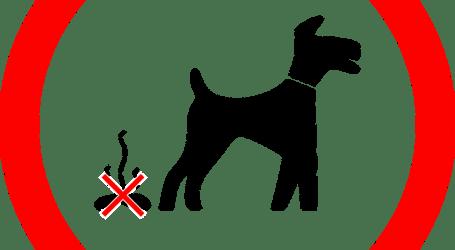 Alboraia, primer municipio de l'horta, en implantar un censo de ADN canino