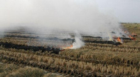 Crema amb condicions de la palla d'arròs a L'Albufera
