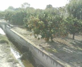 Paterna reutiliza 1.800.000 m3 de agua depurada al año para el riego agrícola