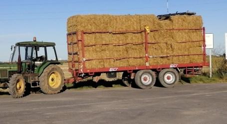La palla d'arròs recolectada a Catarroja té moltes vides