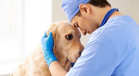 CSIF urge a Conselleria de Agricultura a cubrir las plazas de veterinario vacantes en las oficinas de Llíria, Alzira y Foios
