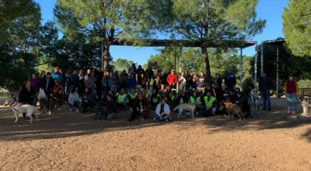 Más de 70 mascotas participan en el curso de obediencia canina urbana organizado por la Concejalía de Bienestar Animal de Paterna