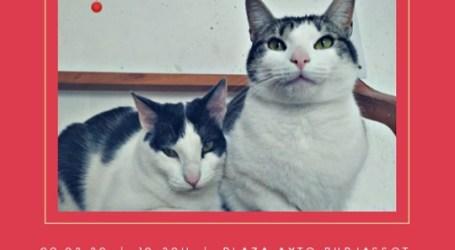 La Protectora de Animales de Burjassot programa una nueva cita solidaria para el fomento de la adopción