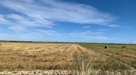 Catarroja impulsarà noves mesures per a la campanya 2020 de recollida de la palla d'arròs