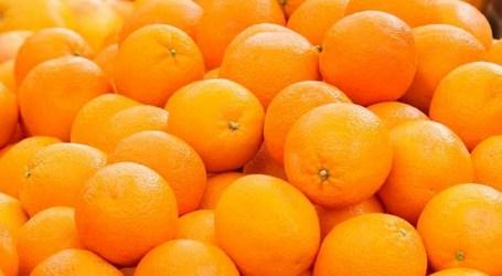 Un hombre de 60 años investigado por hurtar mandarinas en Picassent valoradas en 5.000 euros