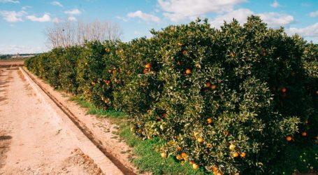 «Precaución a la hora de transitar por los caminos agrícolas y campos»