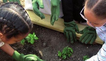 El Programa de Huertos Escolares y Jardinería Sostenible de Burjassot continúa su desarrollo con actividades telemáticas